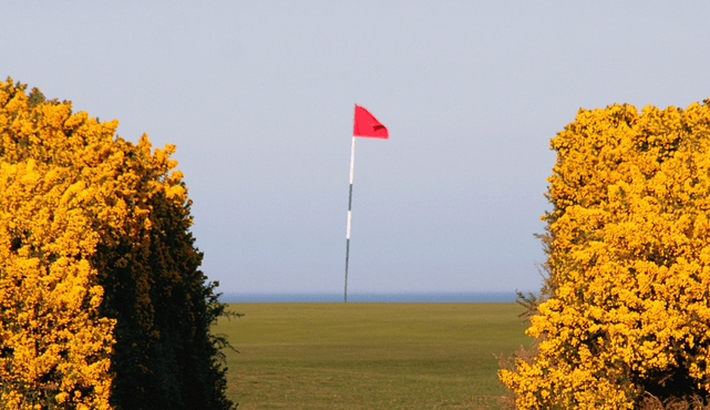 Focus Target Golf